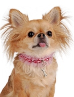 Luxusní oblečky pro psy / Luxury Dog (www.luxurymag.cz)